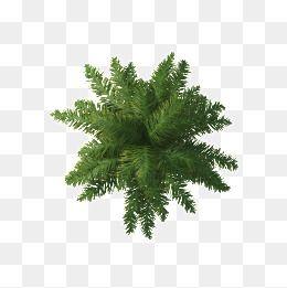 Tree Png Plan