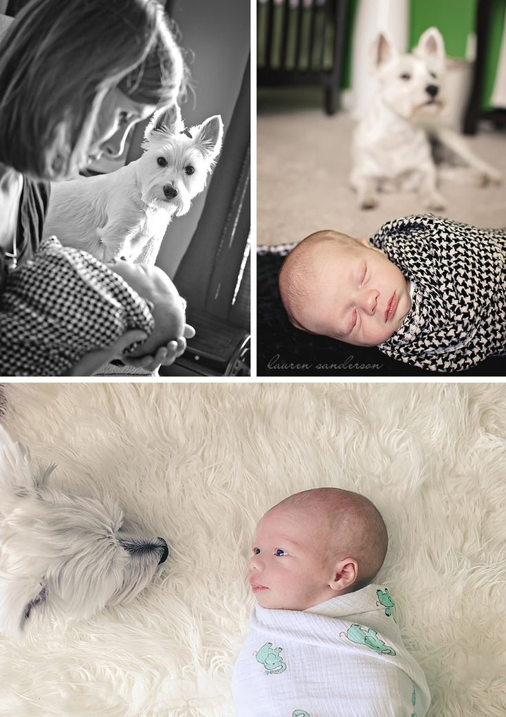 newborn and dog photos with dog in background