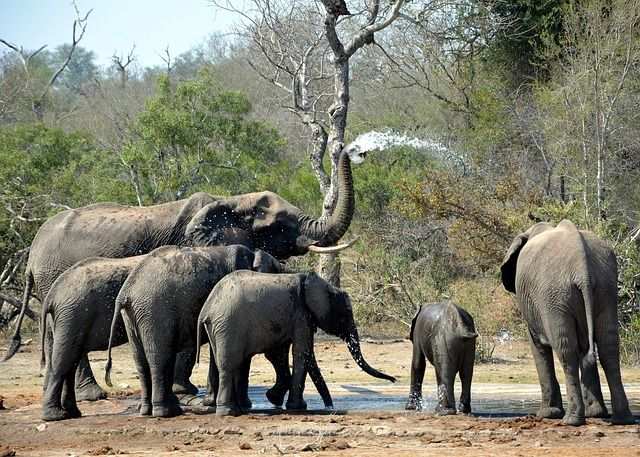 Best African Safaris to Observe Elephants in their Natural Habitat - BookAllSafaris.com