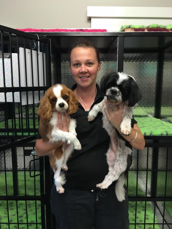 Ceecee and Tilly, both at the vets