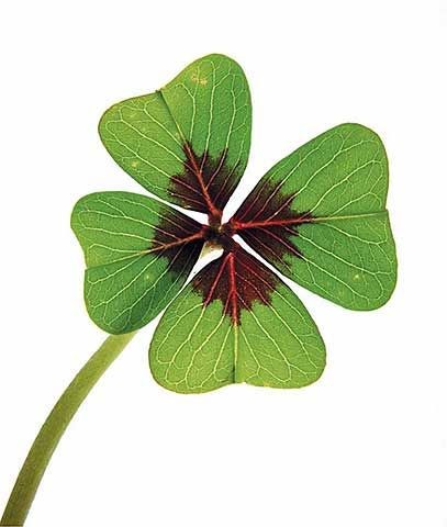 Thank you so much my friend ! wonderful four leaf clover for luck ! luck is always welcome ! ^_^ ♥