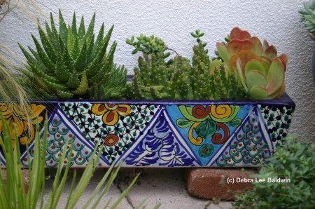 Succulents in a Talavera potMexican Patio
