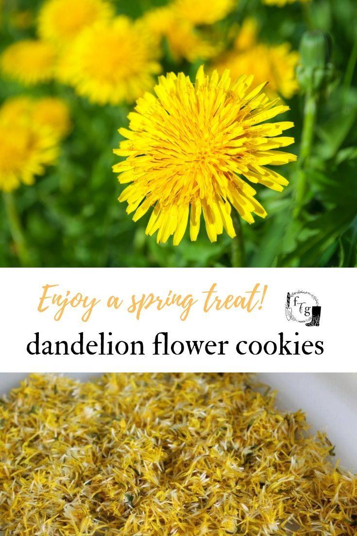 Dandelion Cookie Recipe Flower Food Dandelion Flower Herbs