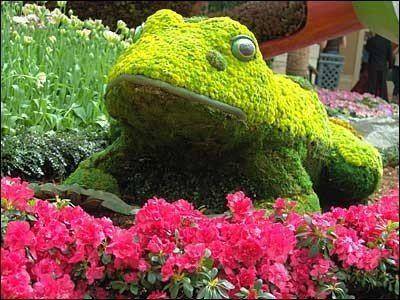 МОХ В САДУ   Дачный сад и огород