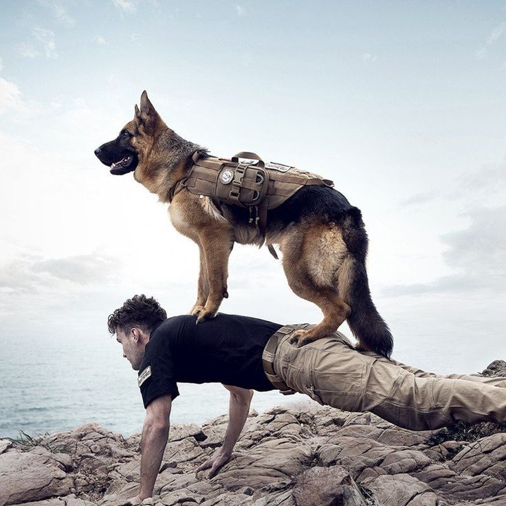 Top Tactical Dog Harness With Pouch. 30% proceeds from every purchase goes to animal charities.