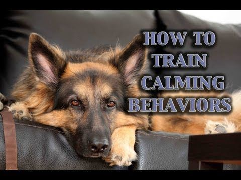 Parenting for Puppies! How To Train Calmness In Dogs (and many more great video tutorials!)