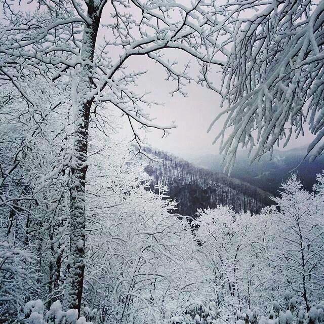 Christmas Tree Inn Tn: 38 Best ChristmasTime__Gatlinburg, Pigeon Forge Dollywood