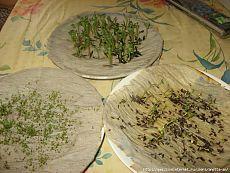 Простейший способ проращивания драгоценных семян.