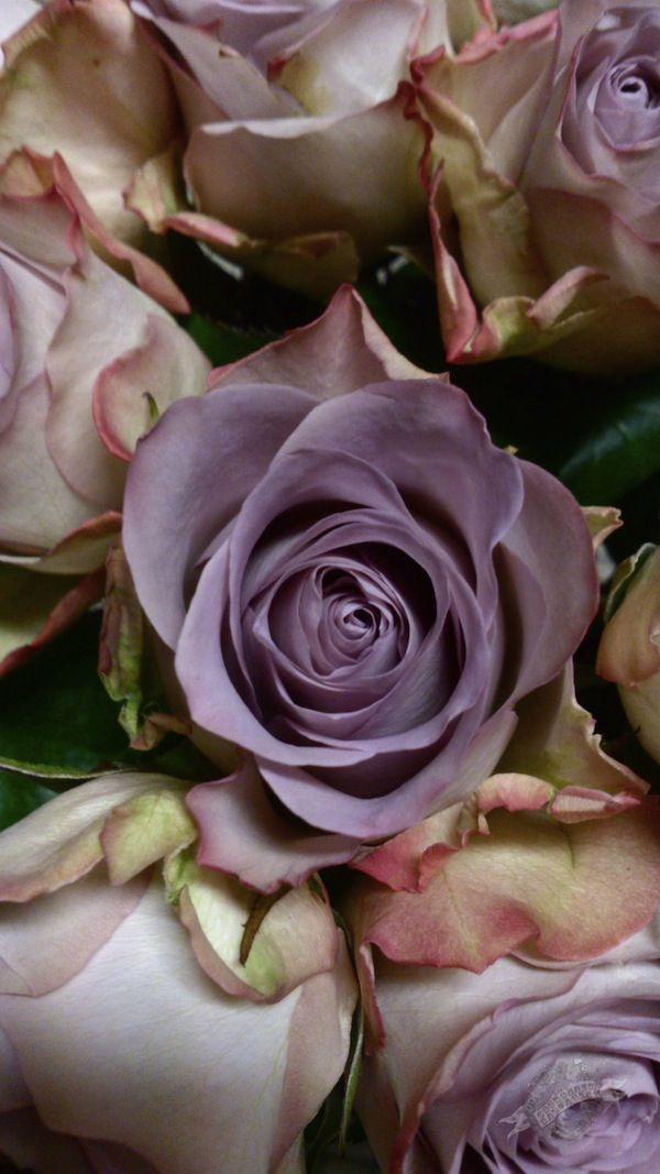 Memory Lane roses at www.lescouronnessauvages.com for Valentine's day
