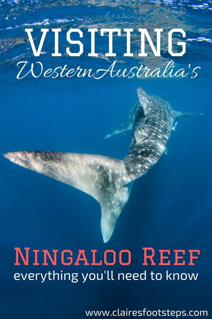 Visiting the Ningaloo Reef is no easy job - it's one of the most remote places in the world. Here's how to make the most of your time in the area!
