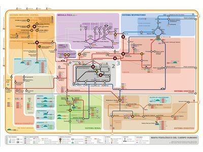 Mapa callejero del funcionamiento del cuerpo humano+ Fuente: http://medtempus.com/archives/mapa-callejero-de-la-fisiologia-humana/
