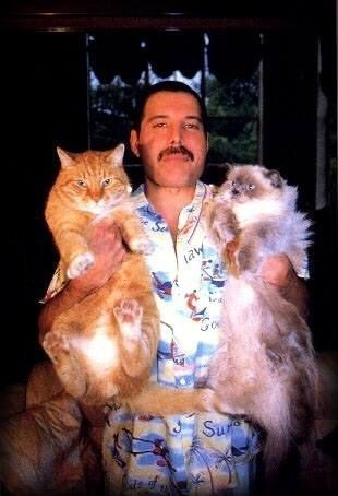 Freddie Mercury and his fat cats. | Community Post: 45 Amazing Pictures Of Celebrities And Cats