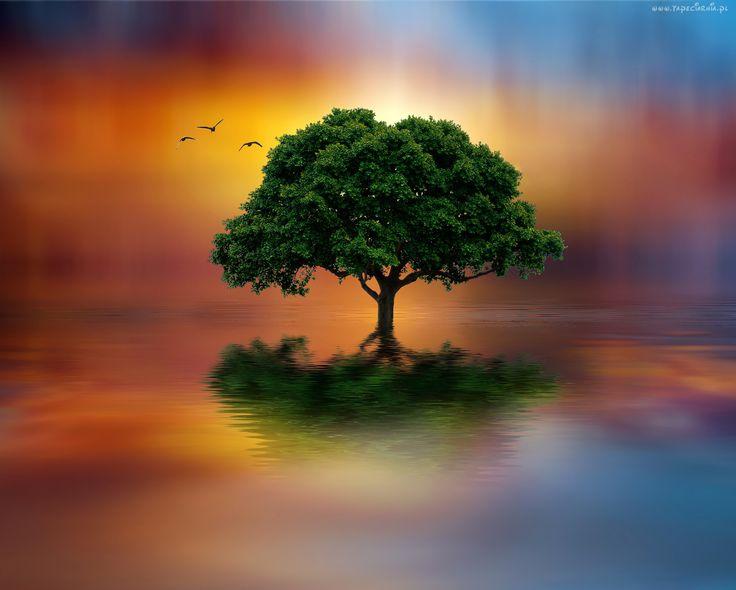 Drzewo, Odbicie, Ptaki
