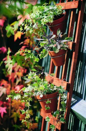 1066 Best Images About Container Gardens On Pinterest