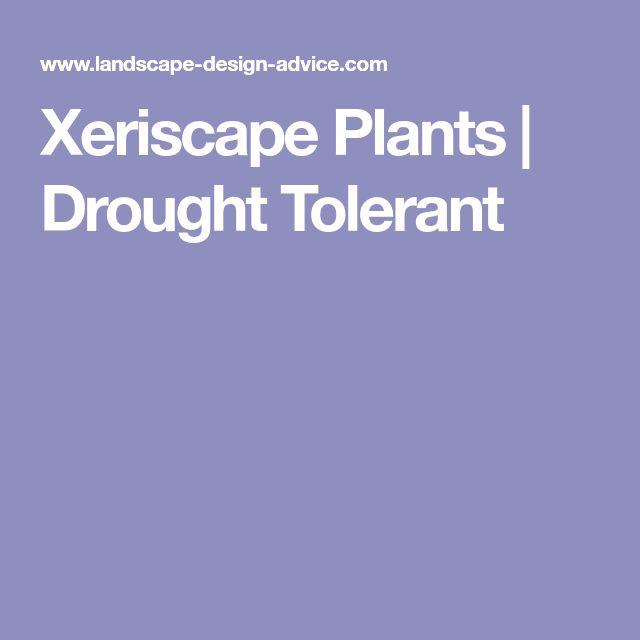 Xeriscape Plants | Drought Tolerant