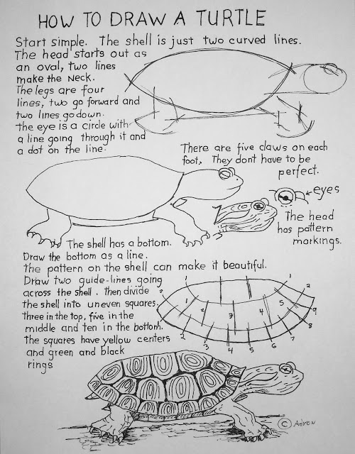 How to Draw Worksheets for Young Artist: How To Draw A Turtle Lesson and Worksheet For Young Artist.