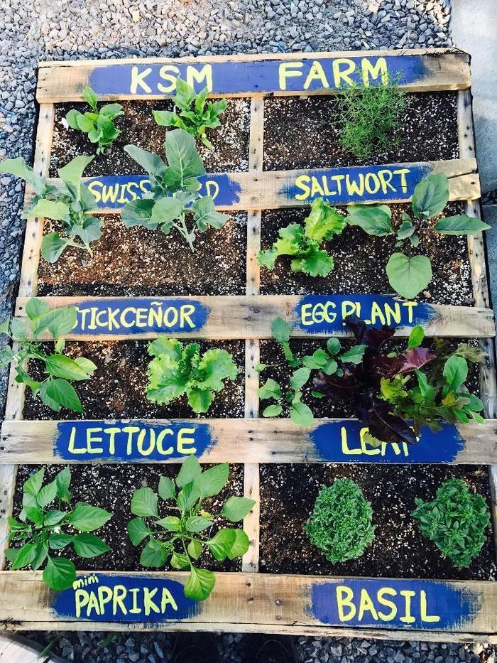 秋から始める家庭菜園 ベランダ菜園 プランターで作れる 葉野菜
