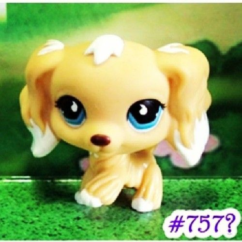 RARE LPS! This is a blonde cocker spaniel with blue eyes #757. I WILL FIND YOU!