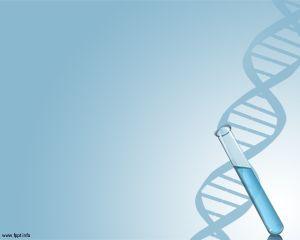 La plantilla PowerPoint de ADN puede ser utilizada para temas de bioinformática…