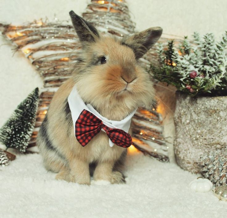 """499 mentions J'aime, 2 commentaires - We love Bunny (@we_lovebunny) sur Instagram : """"Hopefully our christmas card will arrive soon to some of my dear friends. I want to thank you all a…"""""""
