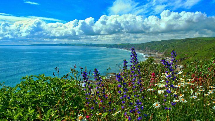 Скачать обои цветы, залив, побережье, Корнуолл, море, Cornwall, Whitsand Bay, облака Англия, England, раздел пейзажи в разрешении 1920x1080
