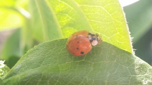 The lady bug and a great sunny spring day