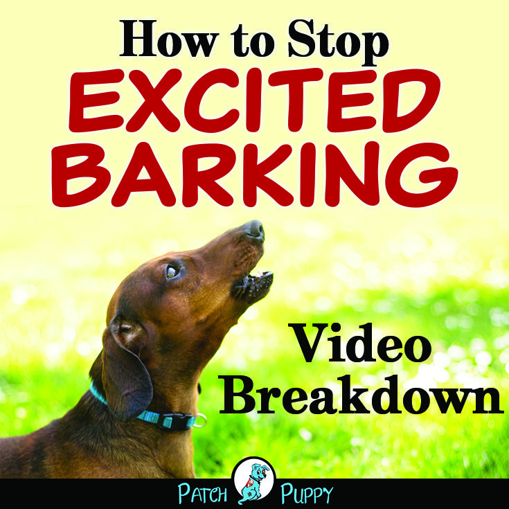 3 Steps To Stop Dog Barking Naturally Video Case Study Dog Training Tips Dog Training Stop Dog Barking