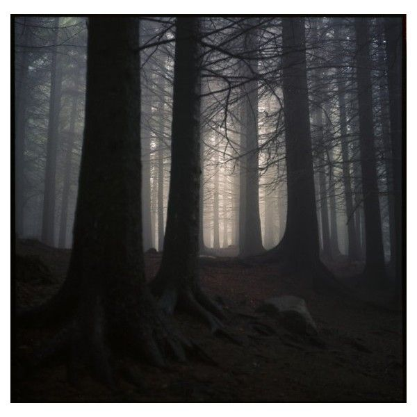 18 Spooky Pictures of Dark Woods ❤ liked on Polyvore featuring backgrounds, pictures, other, forest, photos, borders, filler and picture frame