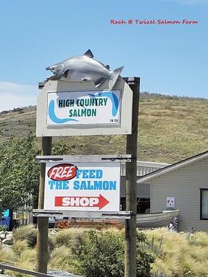 Twizel Salmon Farm, feed the salmon and eat the salmon, 3km south of Twizel. Saumon frais ou saumon fumé. Elevage dans un canal, où l'eau est bleu turquoise