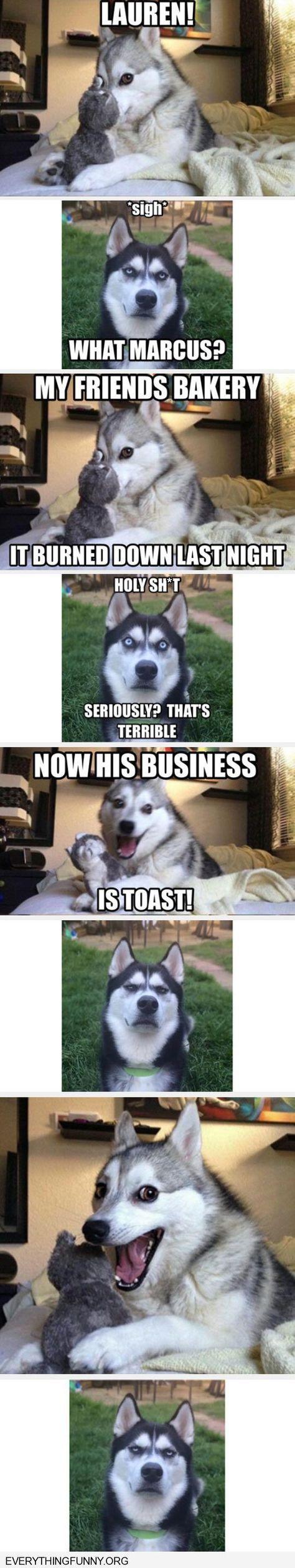 funny dog joke meme with angry husky