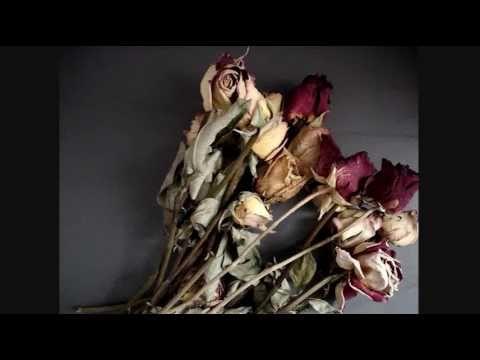 Como secar rosas