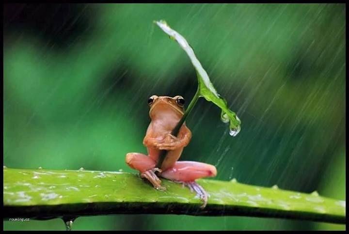 Frog In Rain!