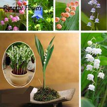 Ландыш Цветок Семена, белл Орхидеи Семена, аромат, Цветы в горшках, так Мило И Красиво 20 Частиц/Мешок(China (Mainland))