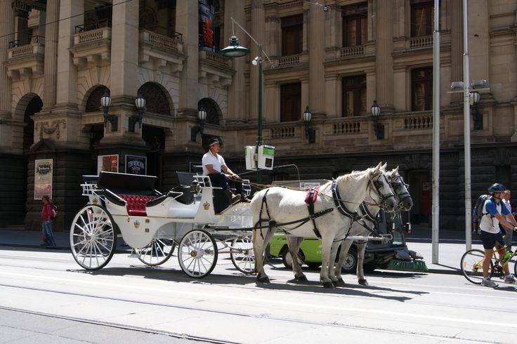 #Travel - Horse Carriage, #Melbourne, #Australia. Photo: D Rudman