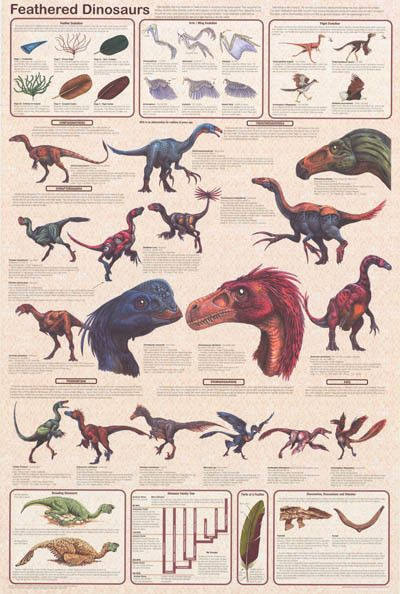 Feathered Dinosaurs Facts and Figures Paleontology Education Poster 24 – BananaRoad