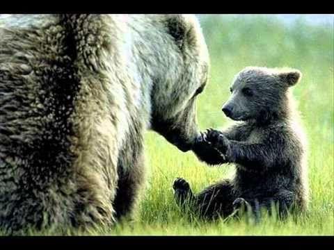 O čem zda se medvědum