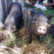 Add a petting zoo to your next family-friendly company picnic!