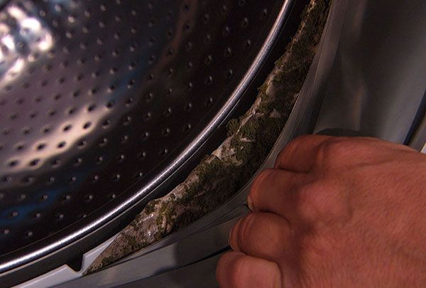 Mold Expert Samuel Dixon Shares Three Tips To Rid Your