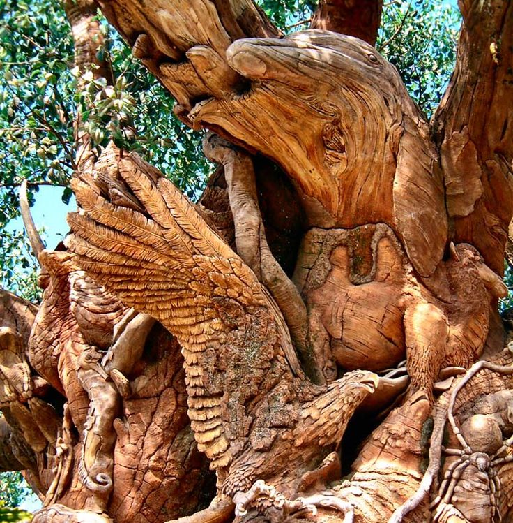 """Tree of Life from Disney's Animal Kingdom. The Tree of Life took two years to """"grow"""" (it is man-made). The cement foundation was poured in the fall of 1995. A team of sculptors from around the world worked six days a week, rain or shine, for a year, to complete the exterior carvings. The work was complete in October 1997."""