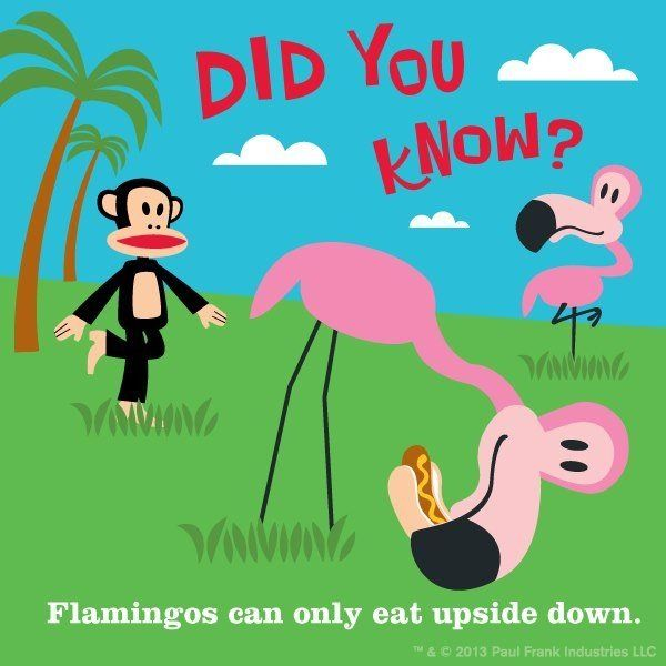 Flamingos can only eat upside down