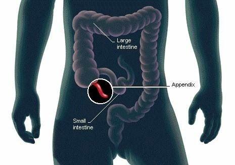 Os cientistas finalmente descobrir a função do apêndice humano | Os seres humanos estão livres