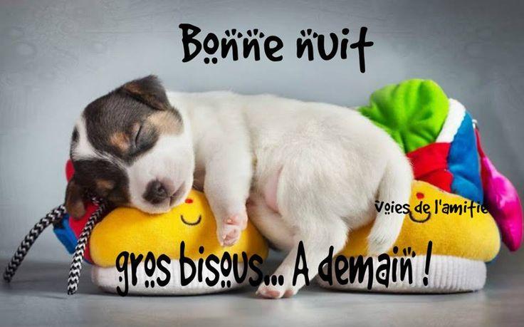 Bonne nuit, gros bisous... À demain! #bonapresmidi chien chiot pantoufle sommeil mignon