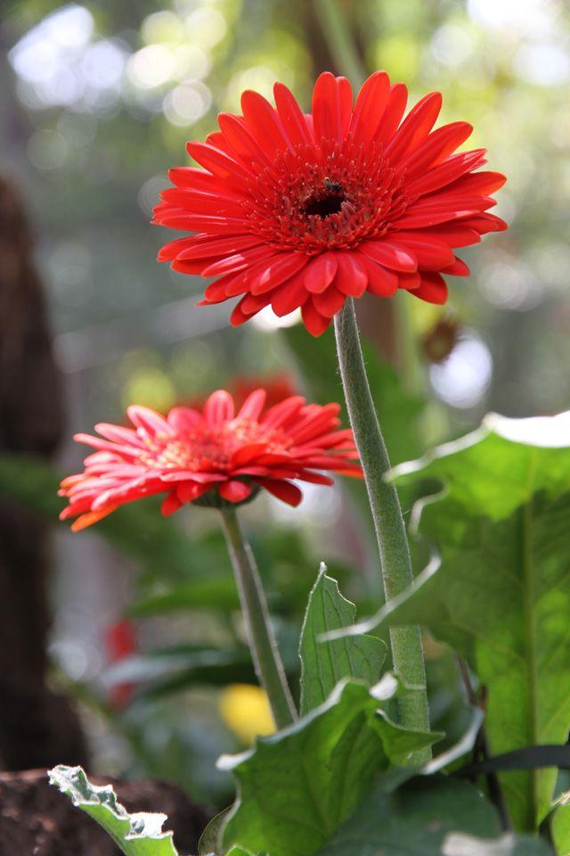 45 Best Indoor Flowering Plants Images On Pinterest 400 x 300