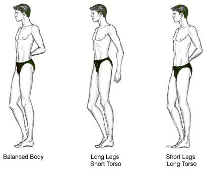 female body shape 2 essay Gender differences are, put simply, certain physical and mental distinctions between male and female humans  2 men have more body hair than women do,.