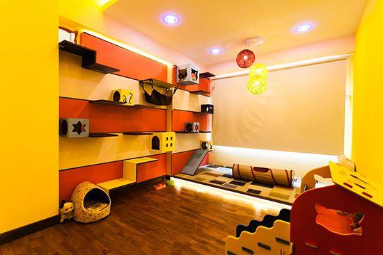 Designer cat climbing shelves, Catification, Interior Design