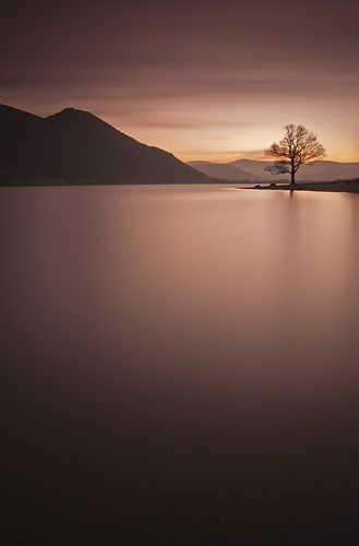 Bassenthwaite Tree - Gorgeous Shot- Adopt the pace of nature: her secret is patience.""