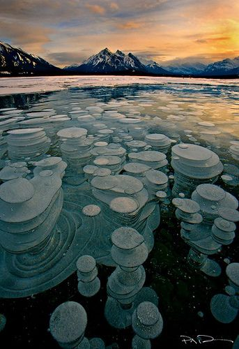 Glass House - Lake Abraham -  Bubbles trapped and frozen under a thick layer of ice creating a glass type feel to the frozen lake