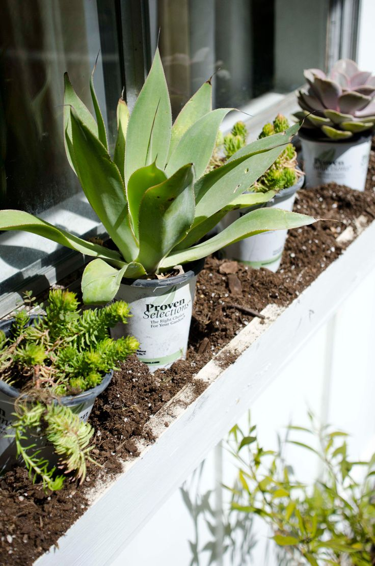 Best 25 window box planter ideas on pinterest window for Low maintenance planter ideas