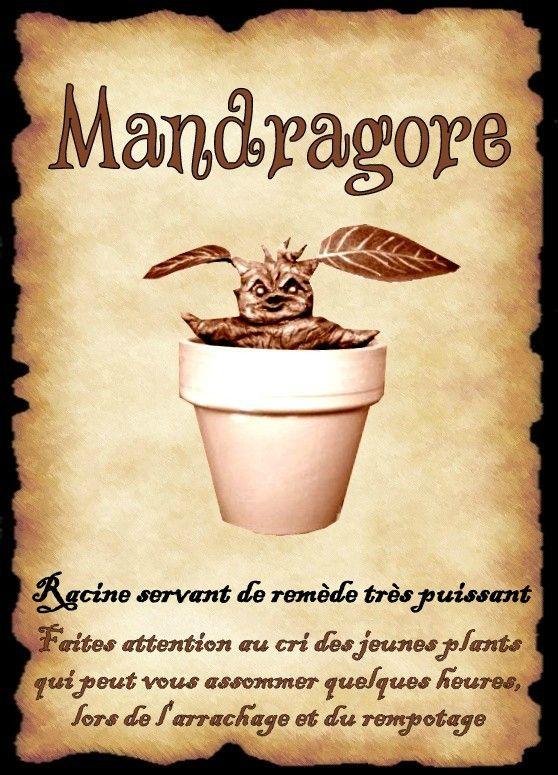 affiche mandragore                                                                                                                                                                                 Plus