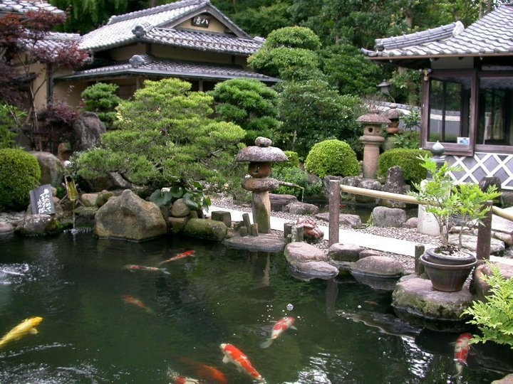 175 best images about ponds in the garden on pinterest for Asian pond design